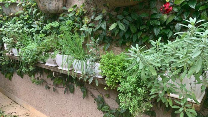 mini horta em local aberto