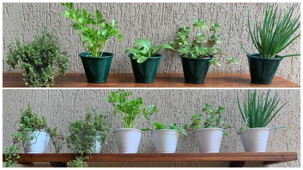 Mini horta na sua casa ou apartamento