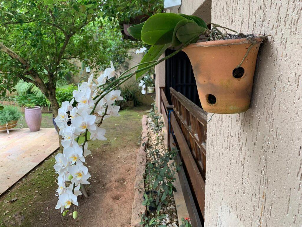 Mini orquídea em um vaso na parede