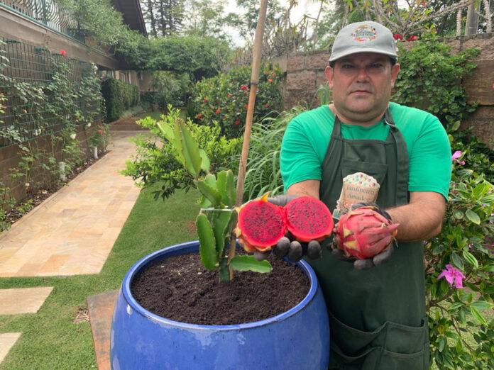 Pitaia do Jardineiro Amador